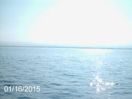 Whale Watching Cruise - Beautiful